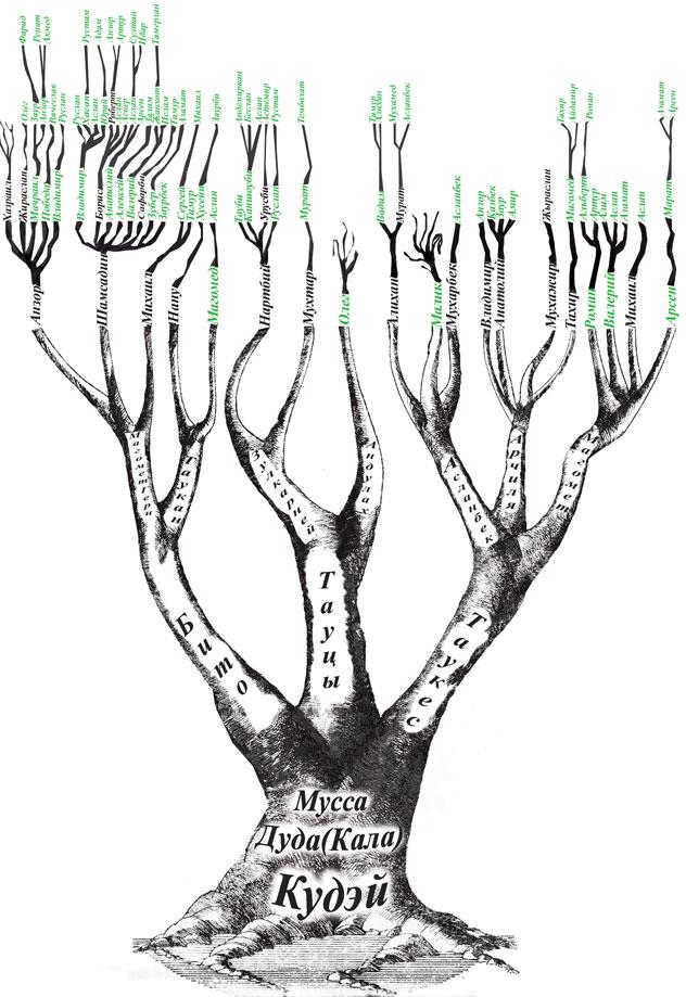 родословного дерева